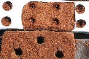 trouage pain de coco culture hors sol