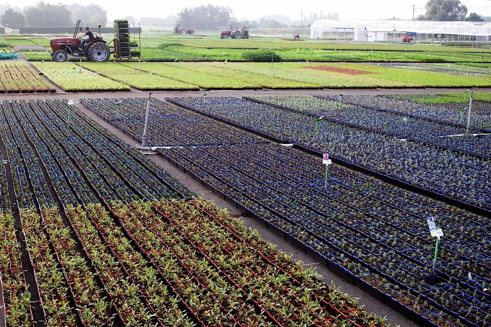 Plantation des plantes vivaces DUMONA
