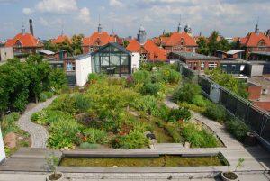 Végétalisation de toiture intensive substrat végétalisation de toiture DUMONA