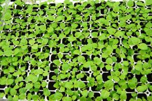 Terreau de semis professionnel bouturage Multiplication des plantes par semis DUMONA