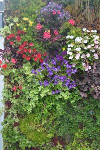 Mur végétal substrat