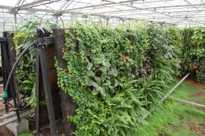 substrat pour mur végétalisé