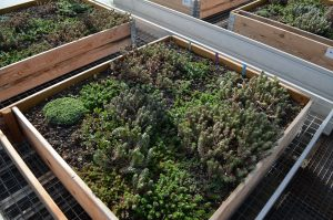 Toiture extensive substrat végétalisation de toiture dumona