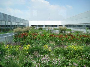 Végétalisation de toiture semi-intensive substrat végétalisation de toiture dumona