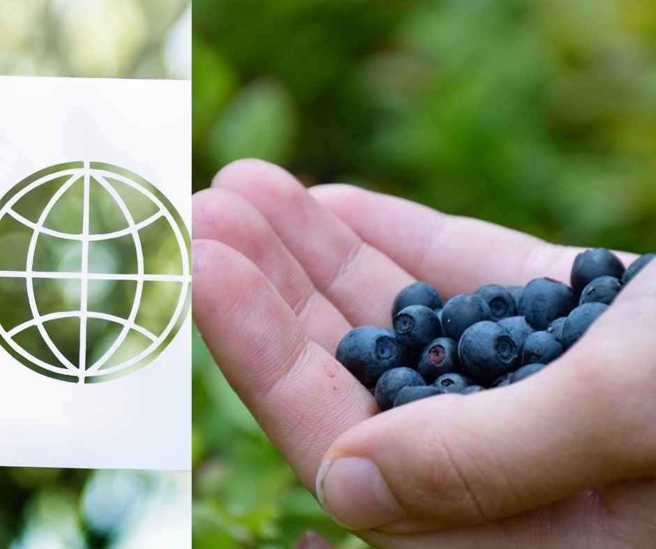 Export terreau fruits rouges Allemagne