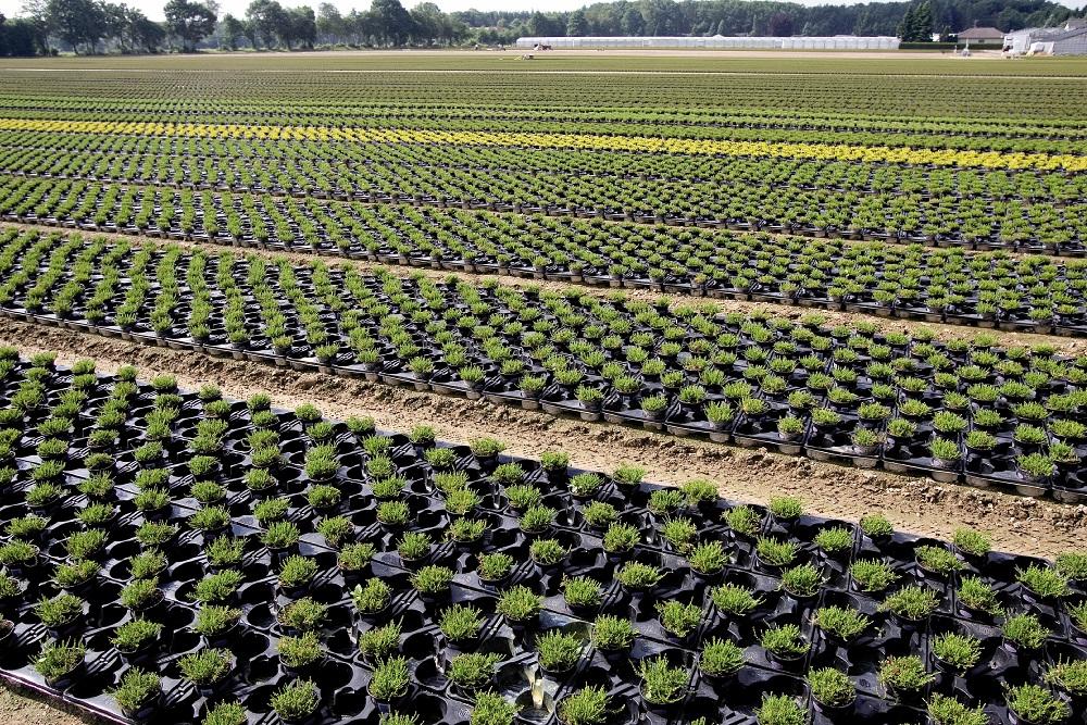 Culture de plantes et arbustes en conteneurs dans une pépinière