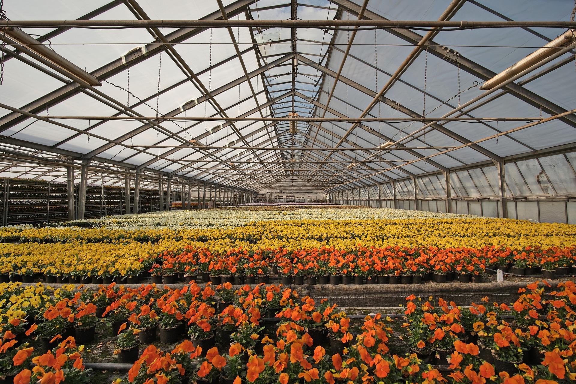 Dumona soutient les horticulteurs en cette période de confinement